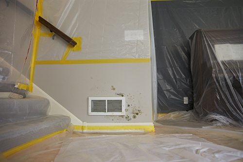 How To Clean Mold On Walls With Vinegar