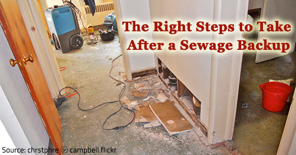 Best Ways To Handle Sewage Cleanup