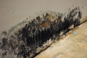 Mold Remediation for East Montgomery County, TX