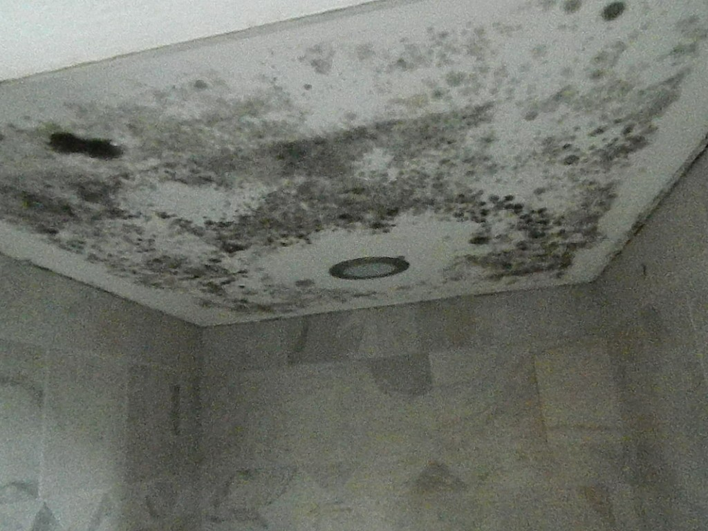 Mold Remediation Services in Kingwood TX
