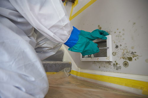 Mold Myths: Use Vinegar Or Bleach To Remove Mold?