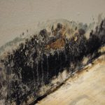 Mold Remediation for Crosby, TX